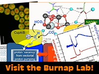 Burnap Lab, Microbiology and Molecular Genetics, Oklahoma State University