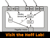 Hoff Lab, Microbiology and Molecular Genetics, Oklahoma State University