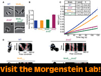 Morgenstein Lab, Microbiology and Molecular Genetics, Oklahoma State University